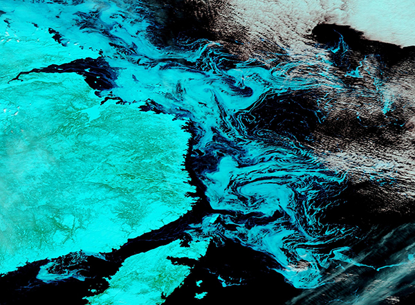 Sea ice off of Newfoundland and Labrador