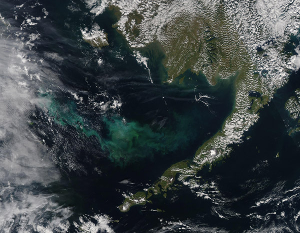 Phytoplankton Bloom off Alaska